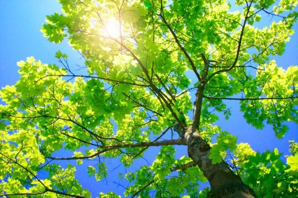 tree03B242E8-6799-8E3C-CD22-BB3D20322CAA.jpg